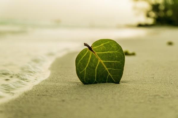 beach-leaf-green-nature-summer-tropical-sand