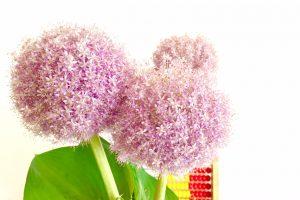 複数の丸い花